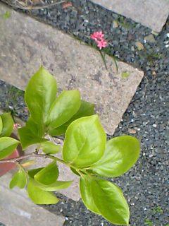 柿と一厘の花